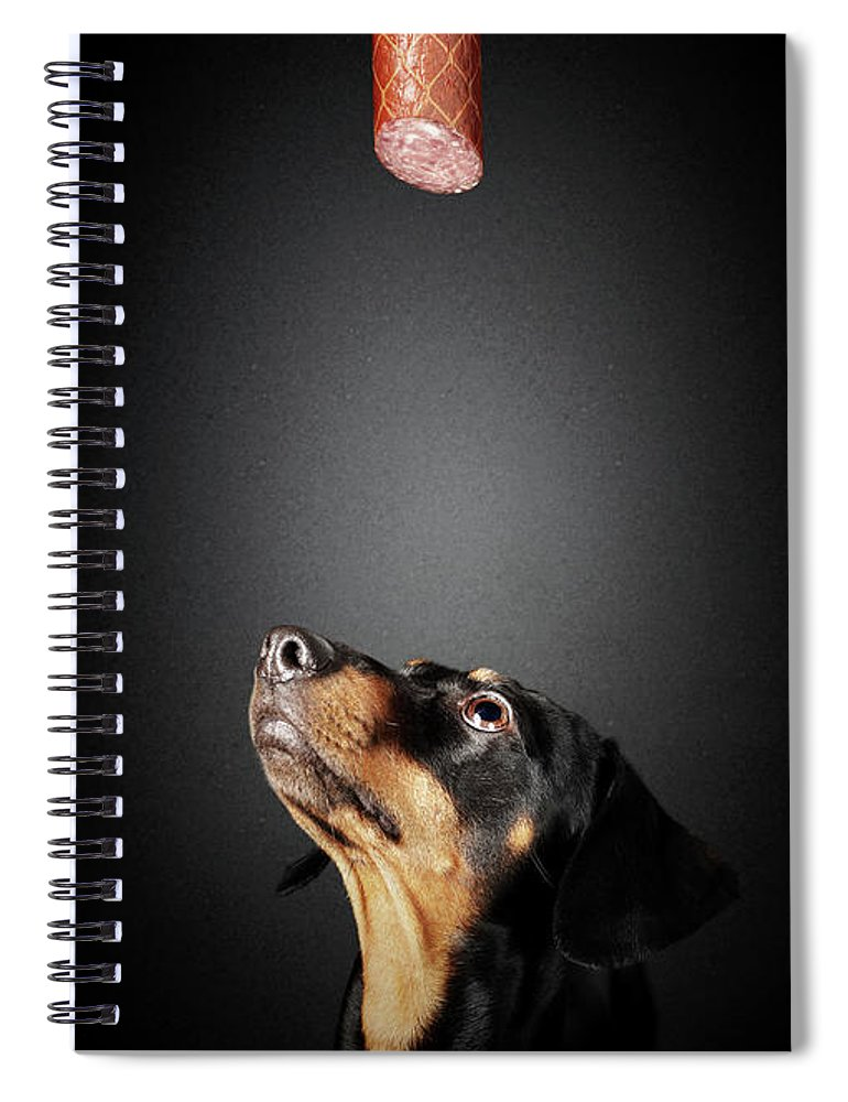 Dachshund Spiral Notebook featuring the photograph Dachshund Looking Up At Salami by Johan Swanepoel