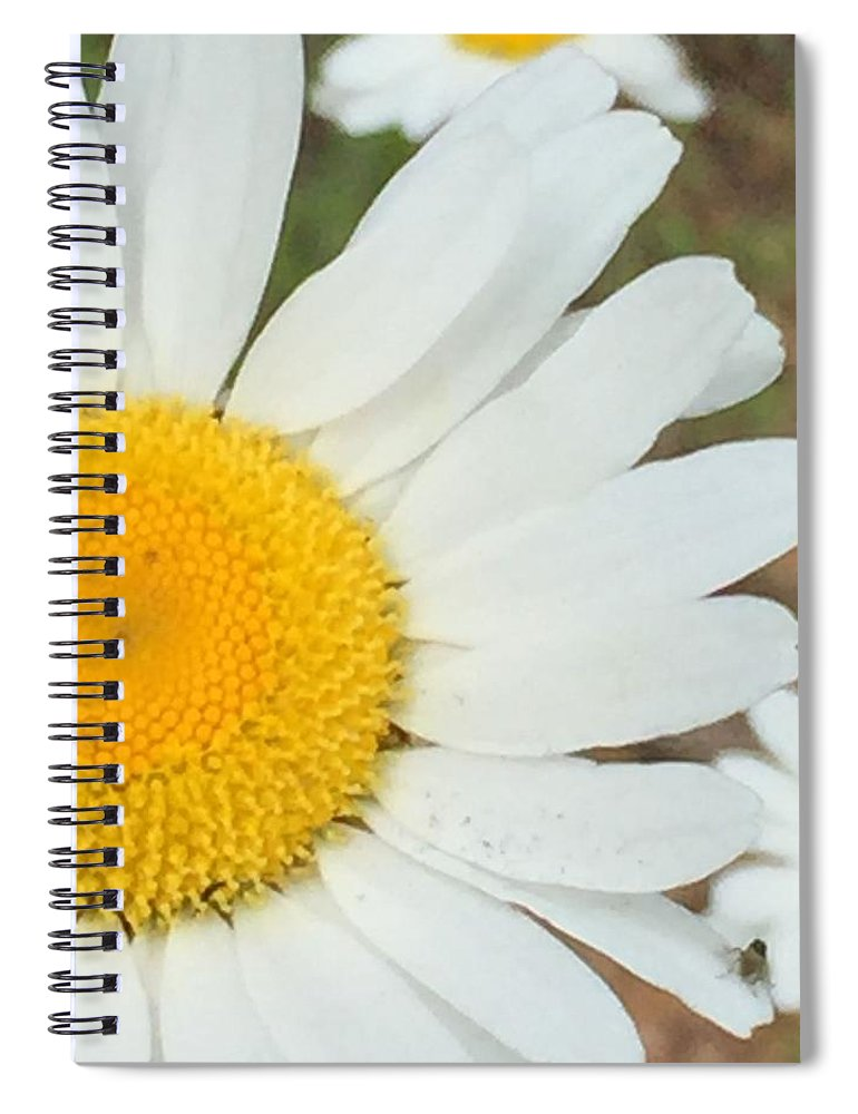 Flower Spiral Notebook featuring the photograph Daisies by Vonda Drees