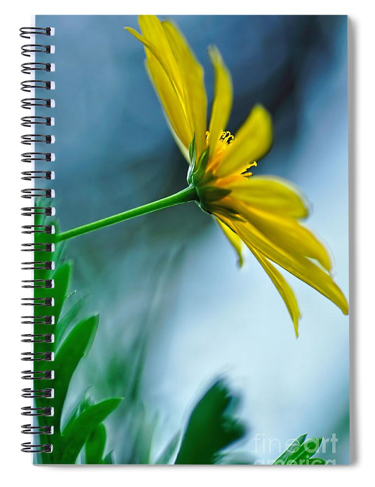 Photography Spiral Notebook featuring the photograph Daisy In The Breeze by Kaye Menner