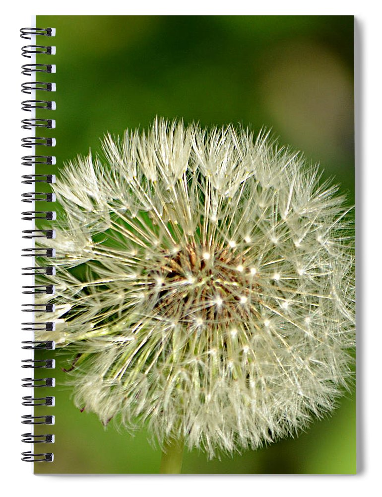 Dandelion Puff Spiral Notebook featuring the photograph Dandelion Puff by Ally White