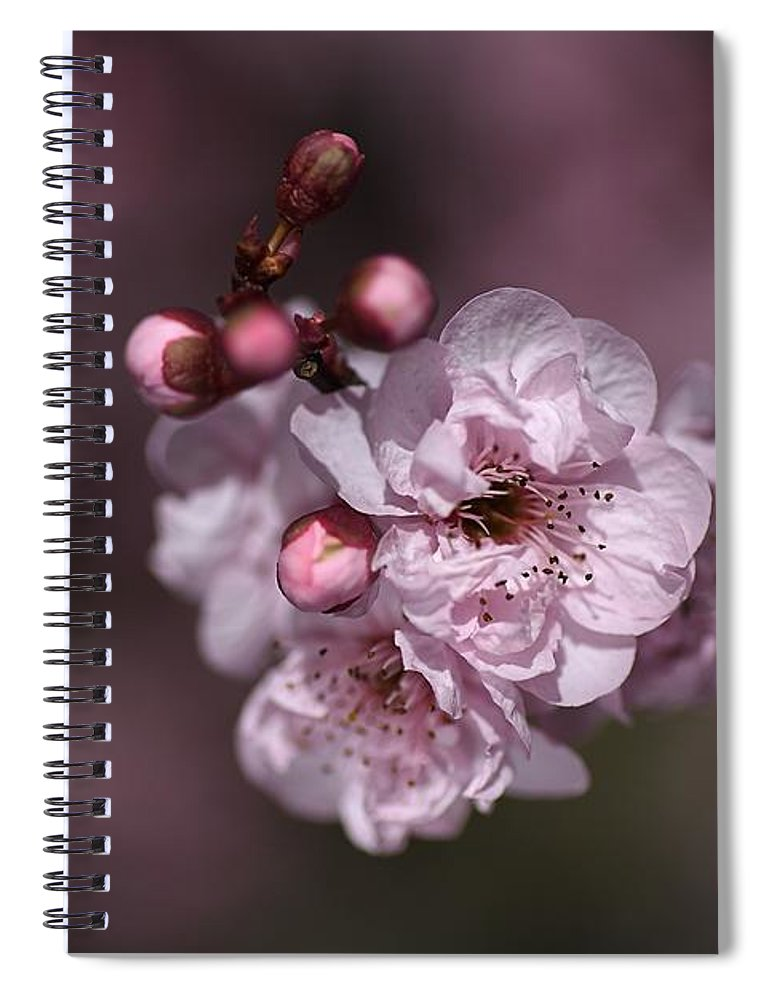 Delightful Pink Prunus Flowers Spiral Notebook For Sale By Joy
