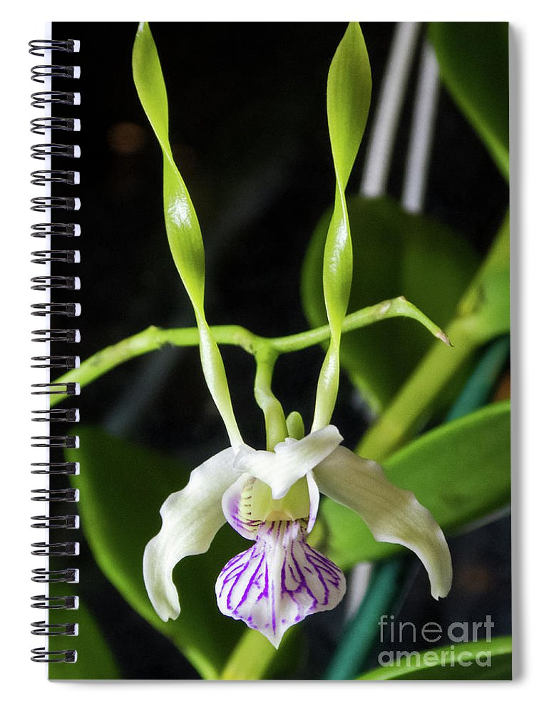 Dendrobium Samurai Spiral Notebook
