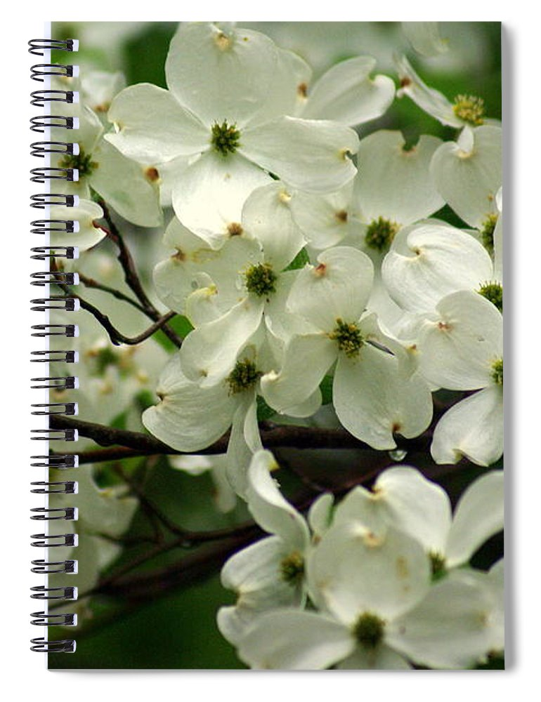 Dogwood Spiral Notebook featuring the photograph Dogwoods by Marty Koch