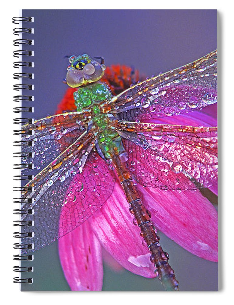 Dew Covered Dragonfly Rests On Purple Cone Flower Spiral Notebook featuring the photograph Dreaming Dragon by Bill Morgenstern