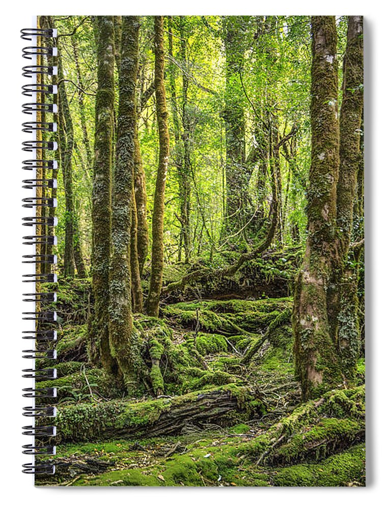 Kremsdorf Spiral Notebook featuring the photograph Enchanted Forest by Evelina Kremsdorf