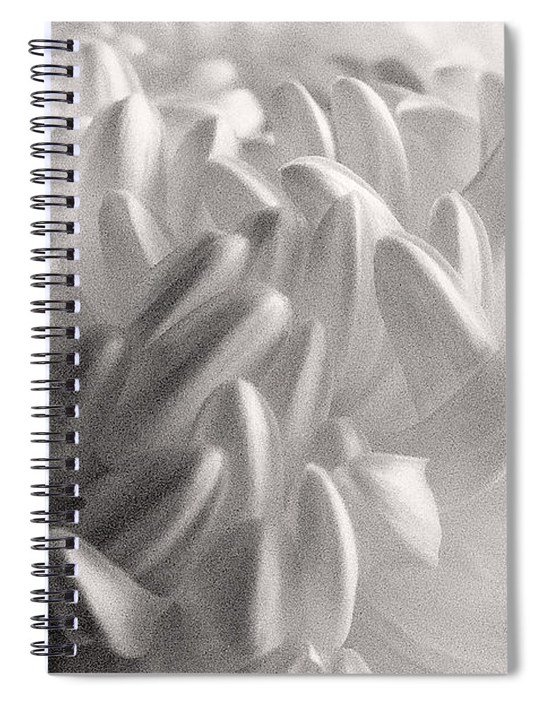 Nature Spiral Notebook featuring the photograph Ethereal Chrysanthemum by Zayne Diamond Photographic