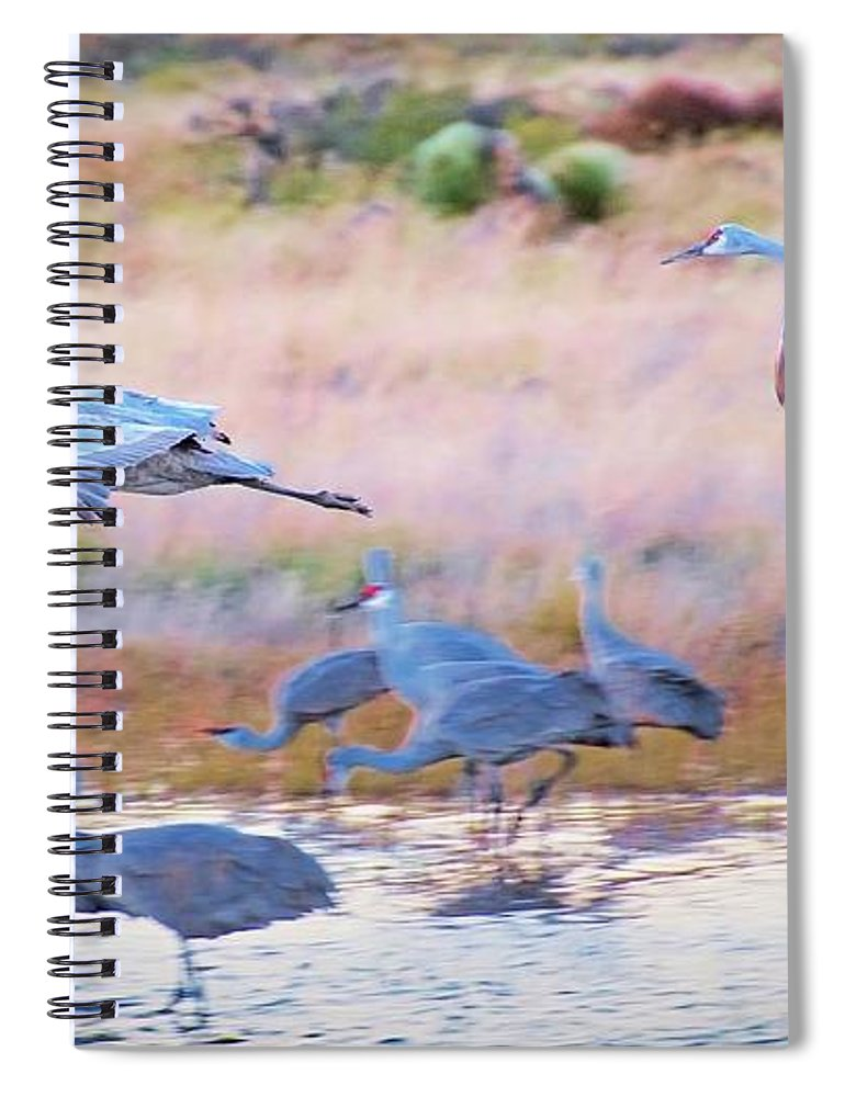 Southwest Spiral Notebook featuring the photograph Evening Return, Sandhill Cranes by Zayne Diamond Photographic