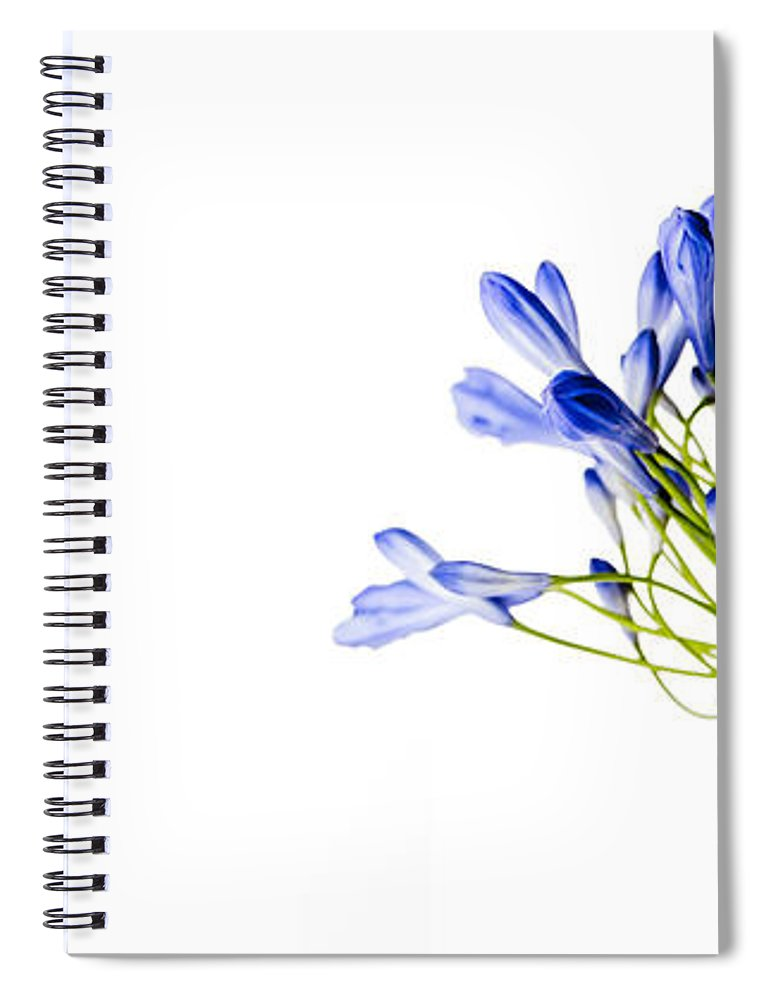 Onion Flower Spiral Notebook featuring the photograph Fading Beauty by Nailia Schwarz