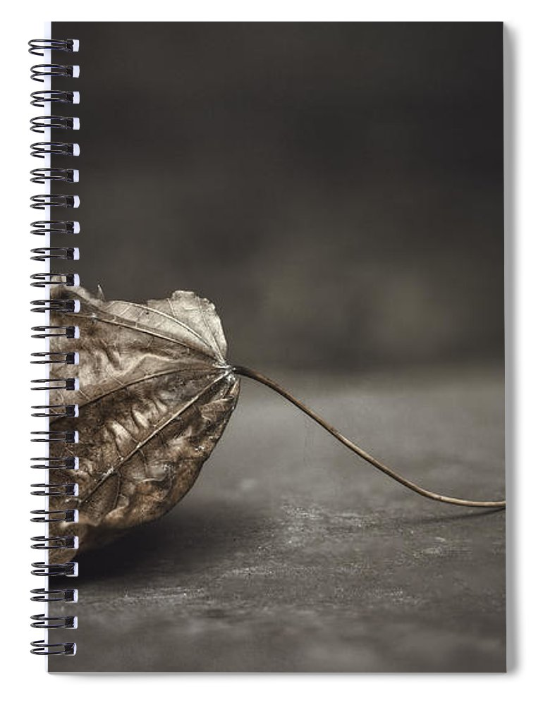 Maple Spiral Notebook featuring the photograph Fallen Leaf by Scott Norris