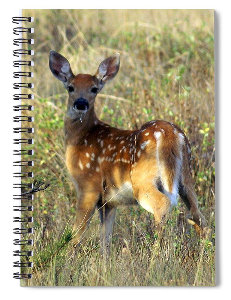 Deer Spiral Notebook featuring the photograph Fawn by Marty Koch