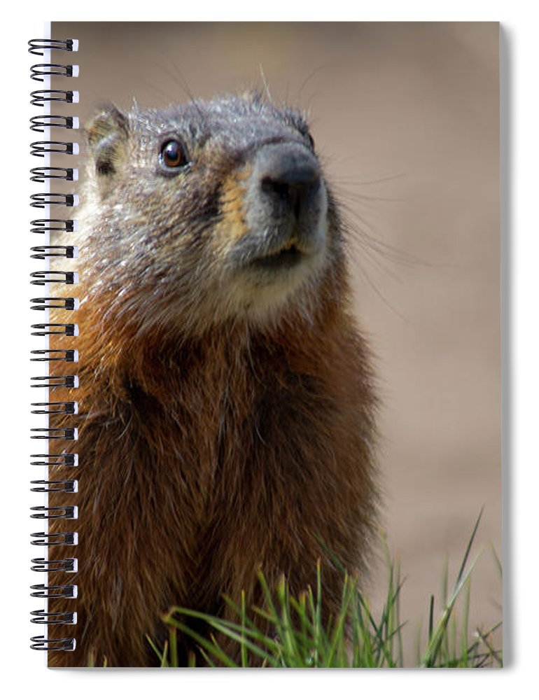 Wyoming Spiral Notebook featuring the photograph Fearless by Frank Madia