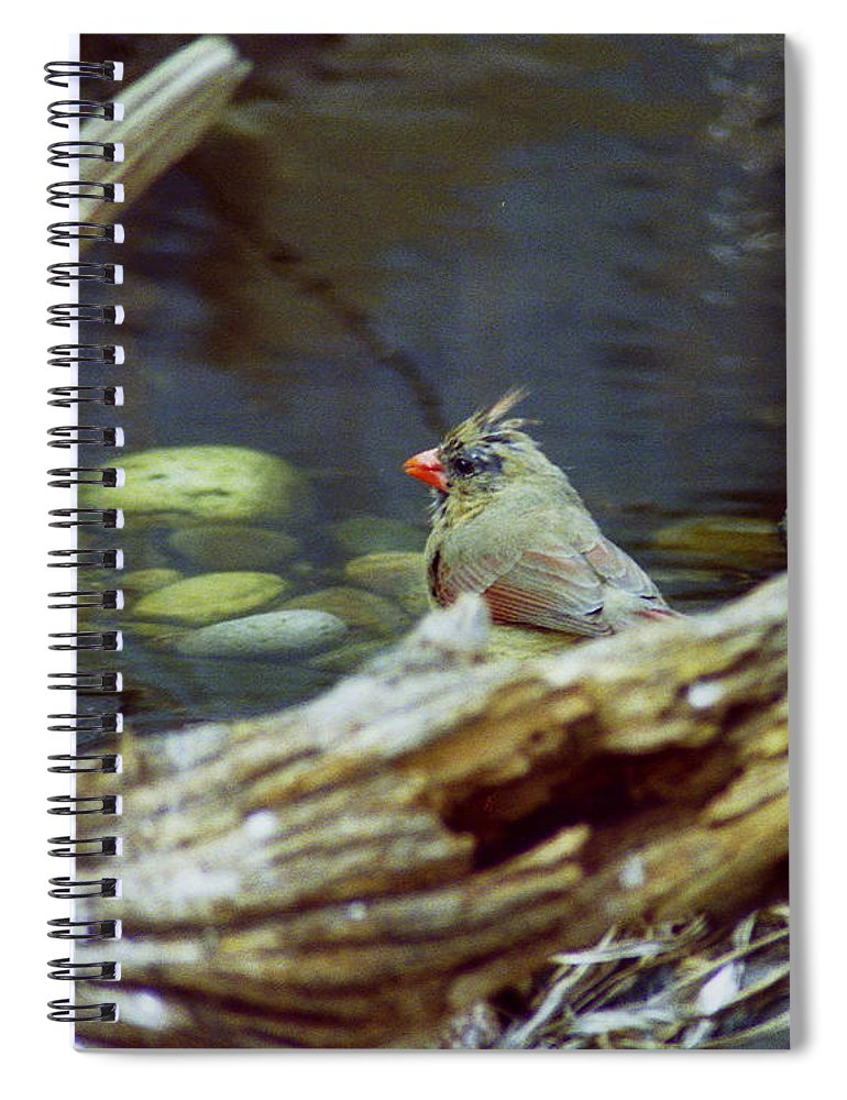 Female Spiral Notebook featuring the photograph Female Cardinal by Michael Peychich
