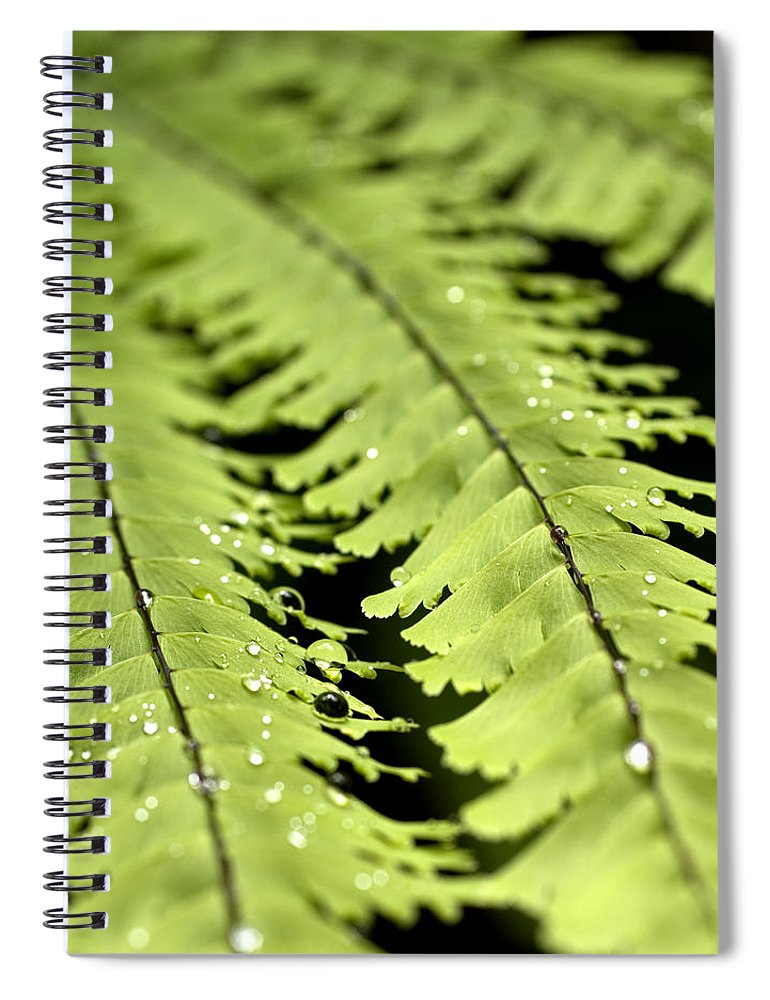 Ferns Spiral Notebook featuring the photograph Fern by Jessica Wakefield