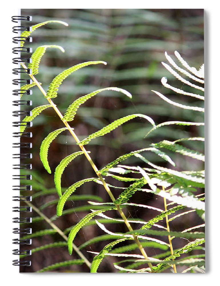 Ferns Spiral Notebook featuring the photograph Ferns In Natural Light by Carol Groenen