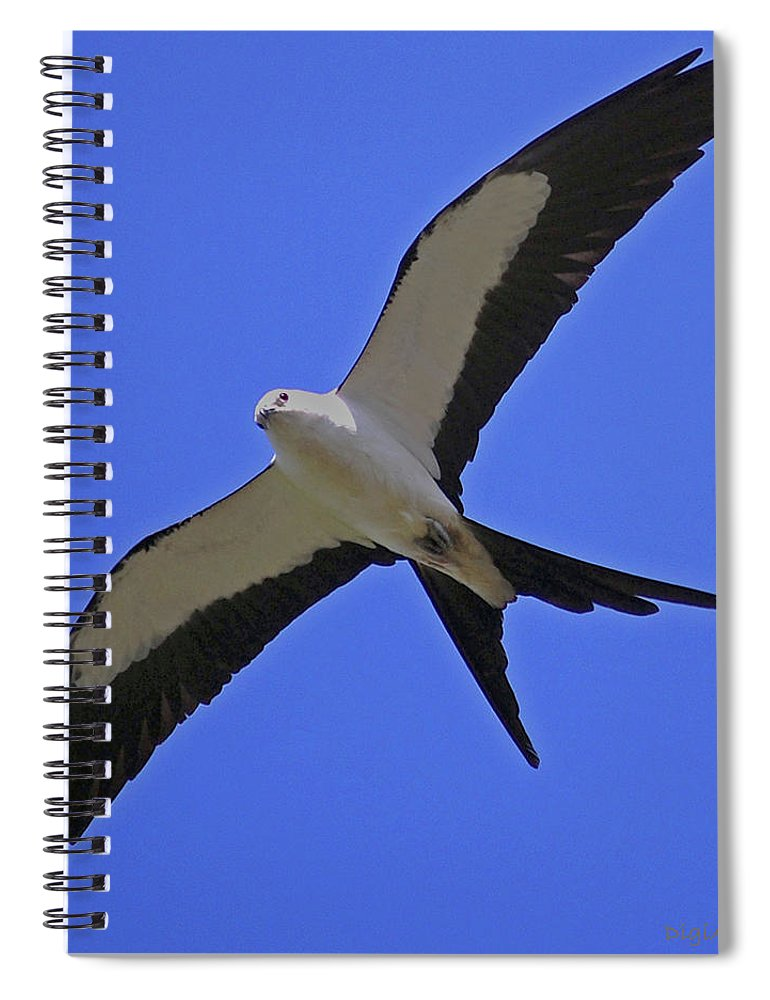 Swallow Tailed Kite Spiral Notebook featuring the digital art Flight Of The Kite by DigiArt Diaries by Vicky B Fuller