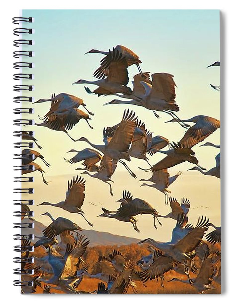 Nature Spiral Notebook featuring the photograph Liftoff, Sandhill Cranes by Zayne Diamond Photographic