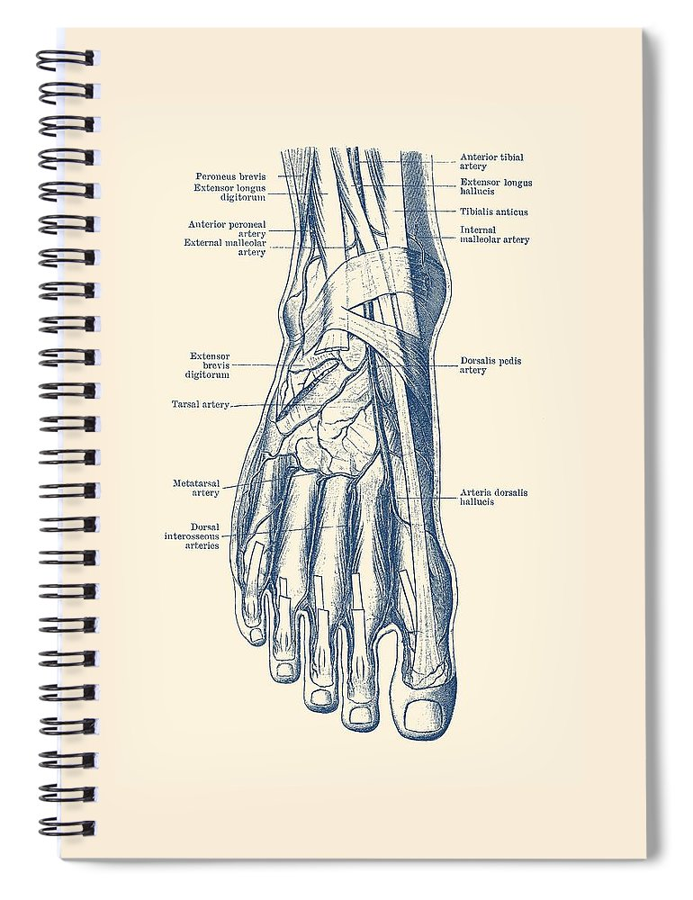 Foot Diagram Human Circulatory System Spiral Notebook For Sale By Vintage Anatomy Prints