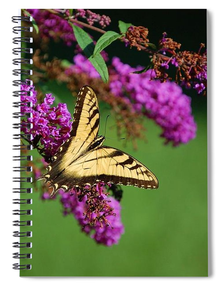 Butterfly Spiral Notebook featuring the photograph Freedom by Debbi Granruth