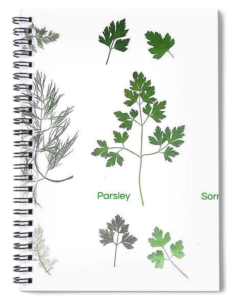 Garden Leaves Spiral Notebook featuring the photograph Garden Herbs by Tibi K