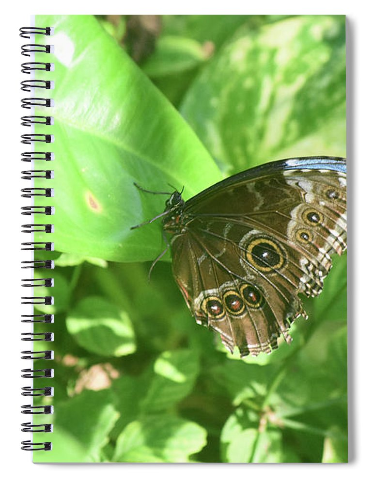 Blue-morpho Spiral Notebook featuring the photograph Garden With A Blue Morpho Butterfly With Wings Closed by DejaVu Designs