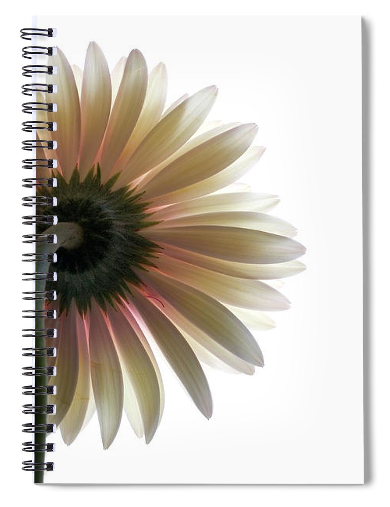 Flower Spiral Notebook featuring the photograph Gerber Daisy by Jessica Wakefield