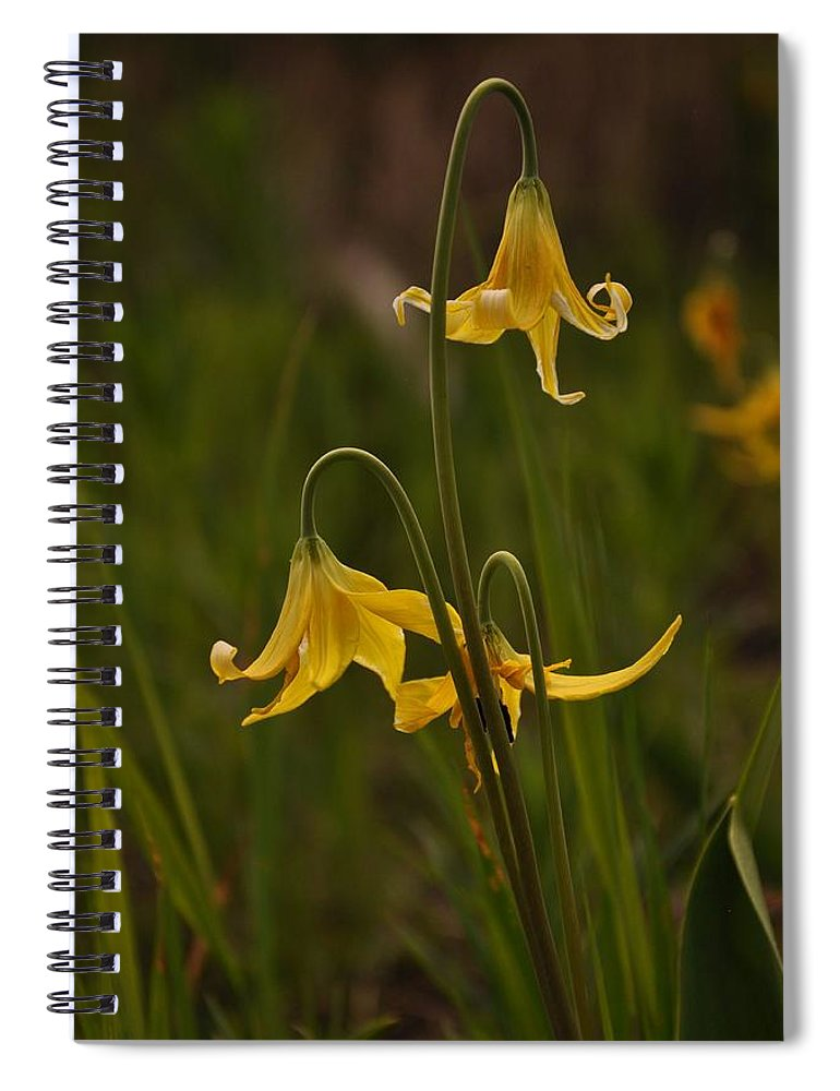 Yellowstone National Park Spiral Notebook featuring the photograph Glacier Lilly by Frank Madia