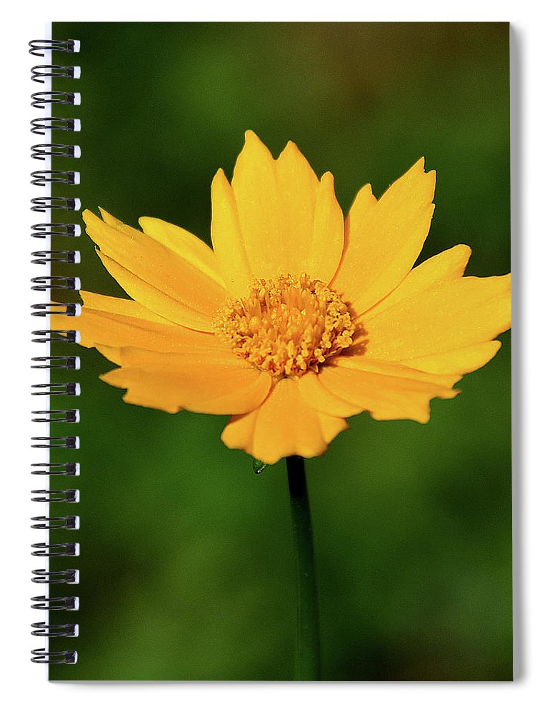 Ann Keisling Spiral Notebook featuring the photograph Gold In The Garden by Ann Keisling