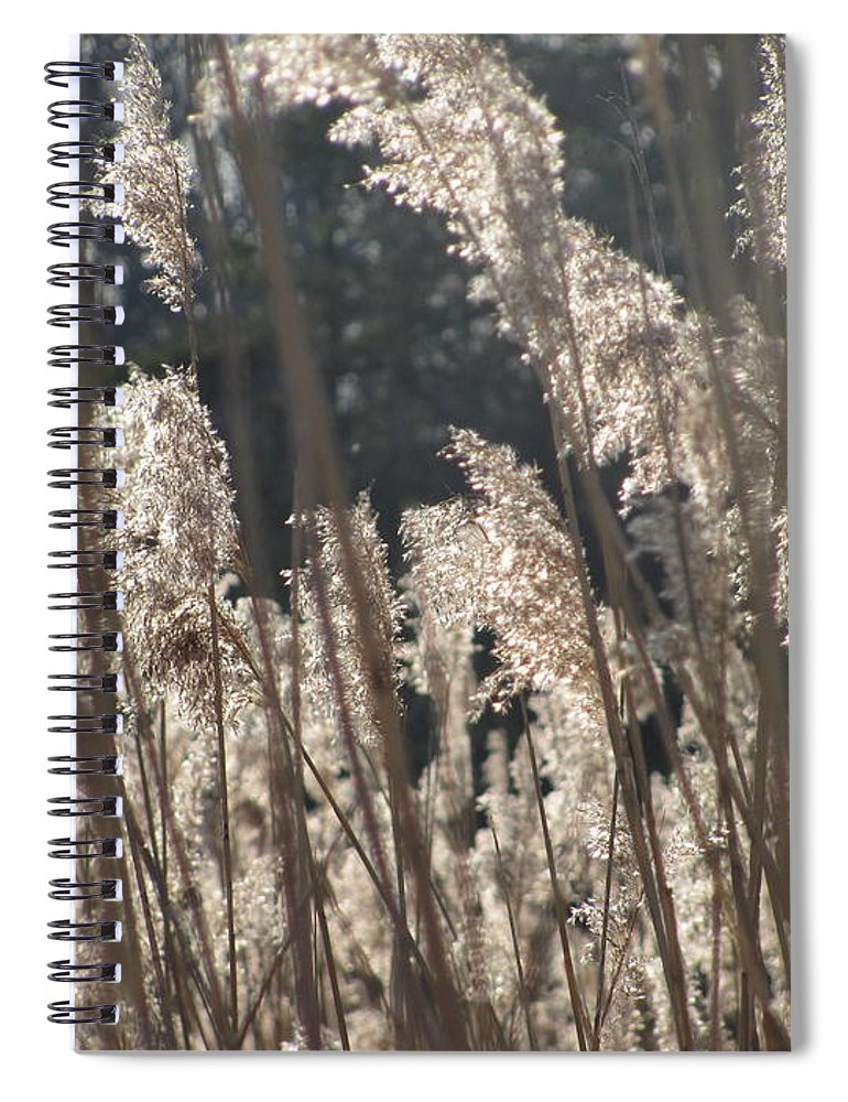 Golden Brown Grass Photographs Canvas Prints Reeds Nuetral Colors Landscape Winter Wetland Images Winter Marsh Photo Prints Maryland Cheasapeake Tributary Spiral Notebook featuring the photograph Golden Brown by Joshua Bales