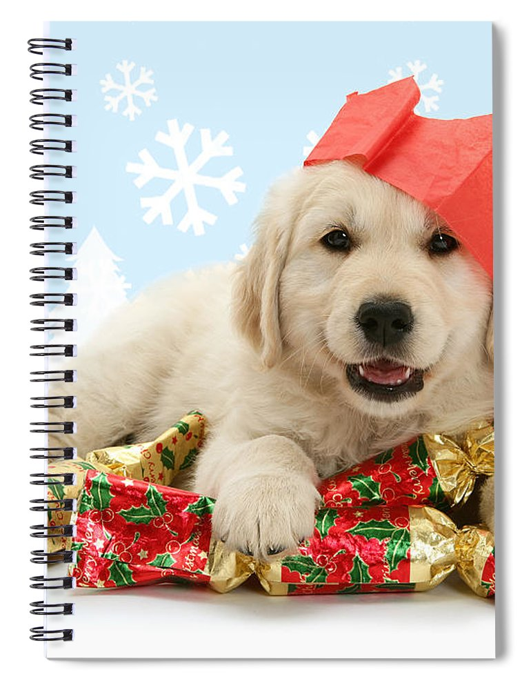 Golden Retriever Spiral Notebook featuring the photograph Goldie Crackers by Warren Photographic