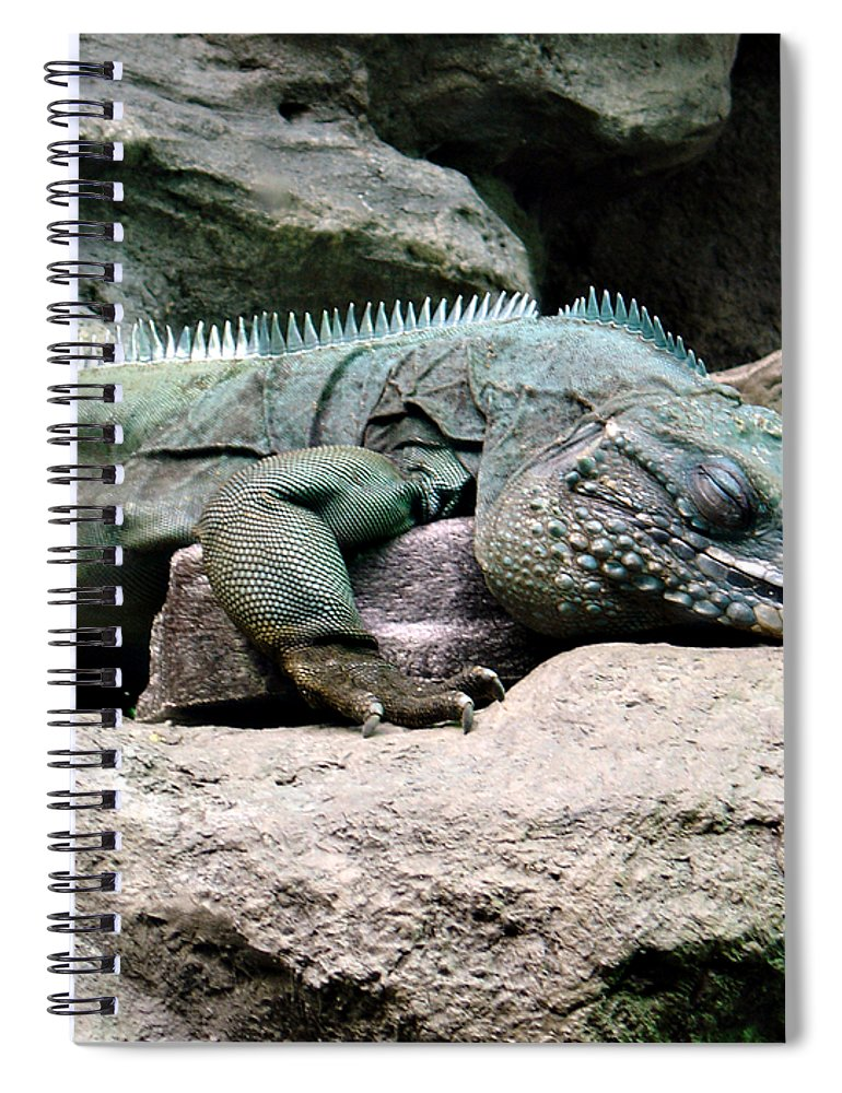 Lizard Spiral Notebook featuring the photograph Grand Cayman Blue Iguana by Angelina Tamez