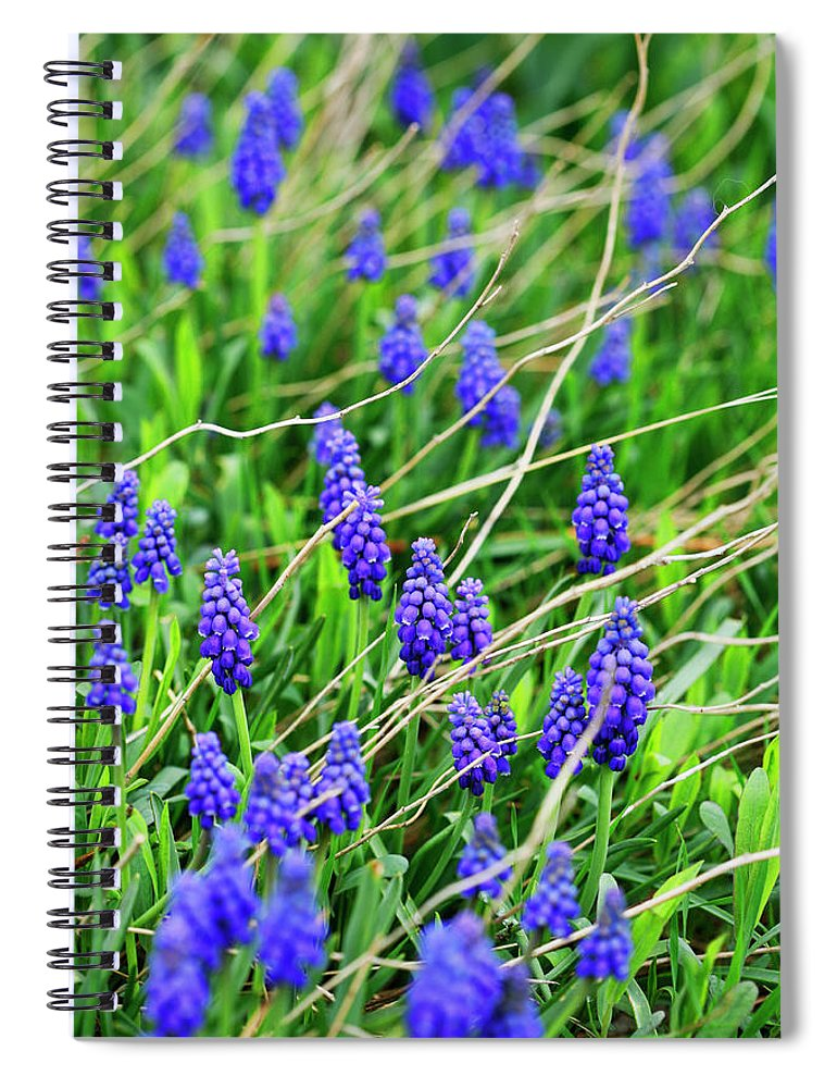 Grape Spiral Notebook featuring the photograph Grape Hyacinth by Marilyn Hunt