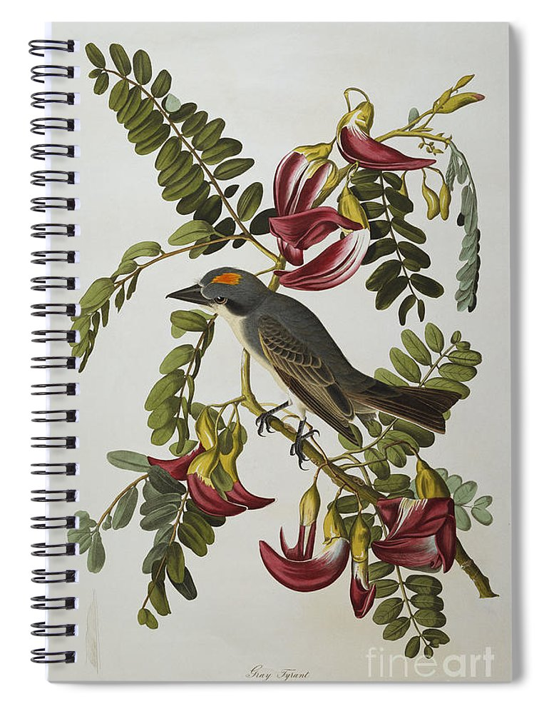 Gray Tyrant. Gray Kingbird (tyrannus Dominicensis) From 'the Birds Of America' (aquatint & Engraving With Hand-colouring) By John James Audubon (1785-1851) Spiral Notebook featuring the painting Gray Tyrant by John James Audubon