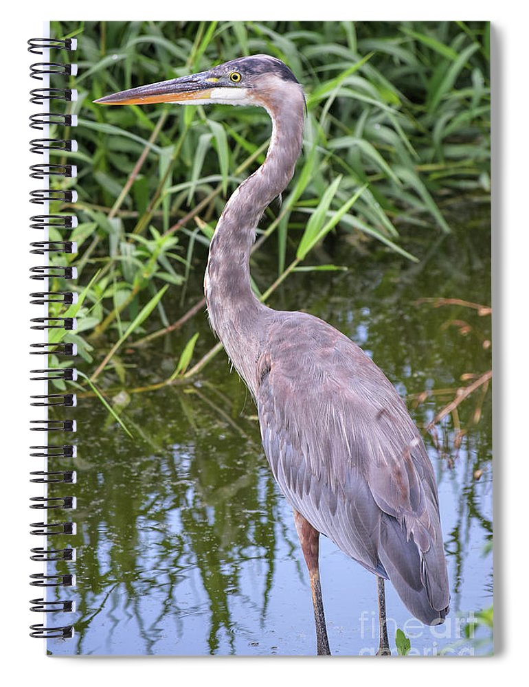 Great Blue Heron Spiral Notebook featuring the photograph Great Blue Heron Closeup by William Tasker