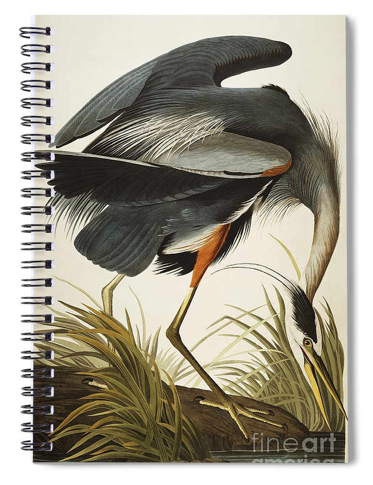 Great Blue Heron Spiral Notebook featuring the drawing Great Blue Heron by John James Audubon