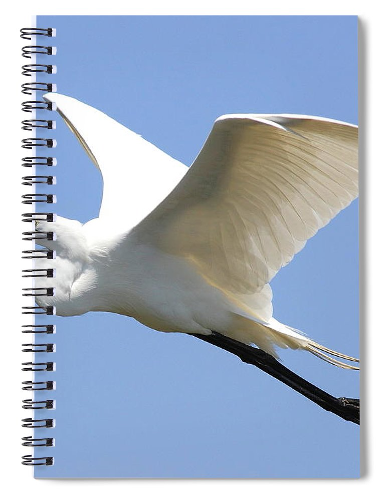 Bird Spiral Notebook featuring the photograph Great White Egret In Flight . 40d6845 by Wingsdomain Art and Photography