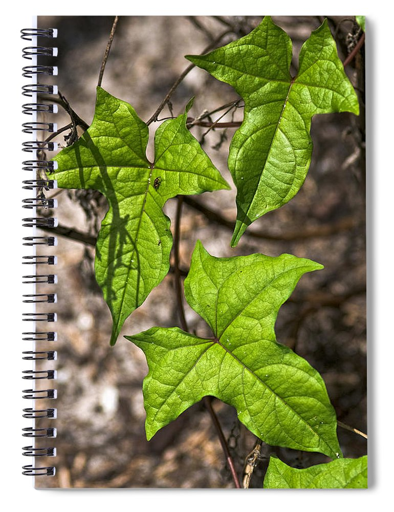 Green Spiral Notebook featuring the photograph Green Arrowheads by Christopher Holmes