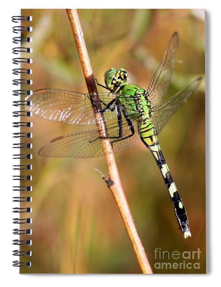 Dragonfly Spiral Notebook featuring the photograph Green Dragonfly Closeup by Carol Groenen