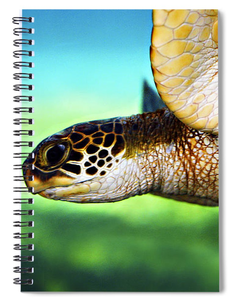 Green Spiral Notebook featuring the photograph Green Sea Turtle by Marilyn Hunt
