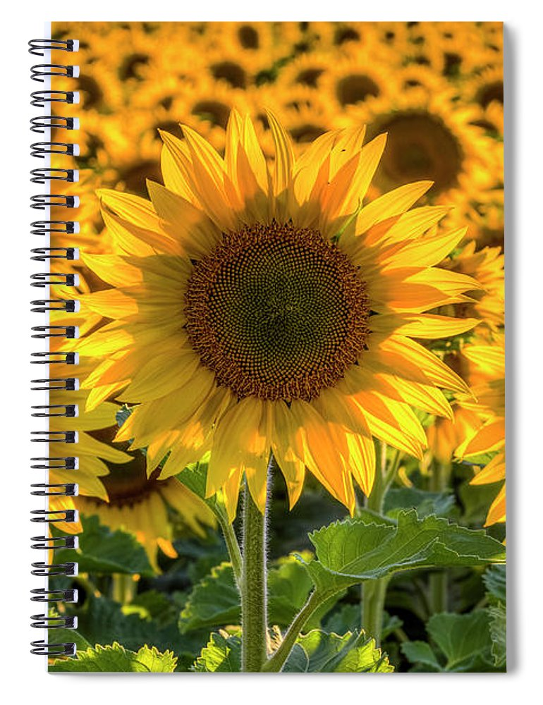 Sunflower Spiral Notebook featuring the photograph Happy by Mark Kiver