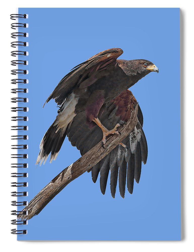 Harris Hawk Spiral Notebook featuring the photograph Harris Hawk - Transparent by Nikolyn McDonald