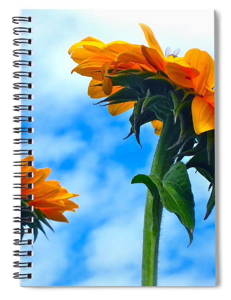 Photograph Of Sunflowers Spiral Notebook featuring the photograph Heaven Above ... by Gwyn Newcombe
