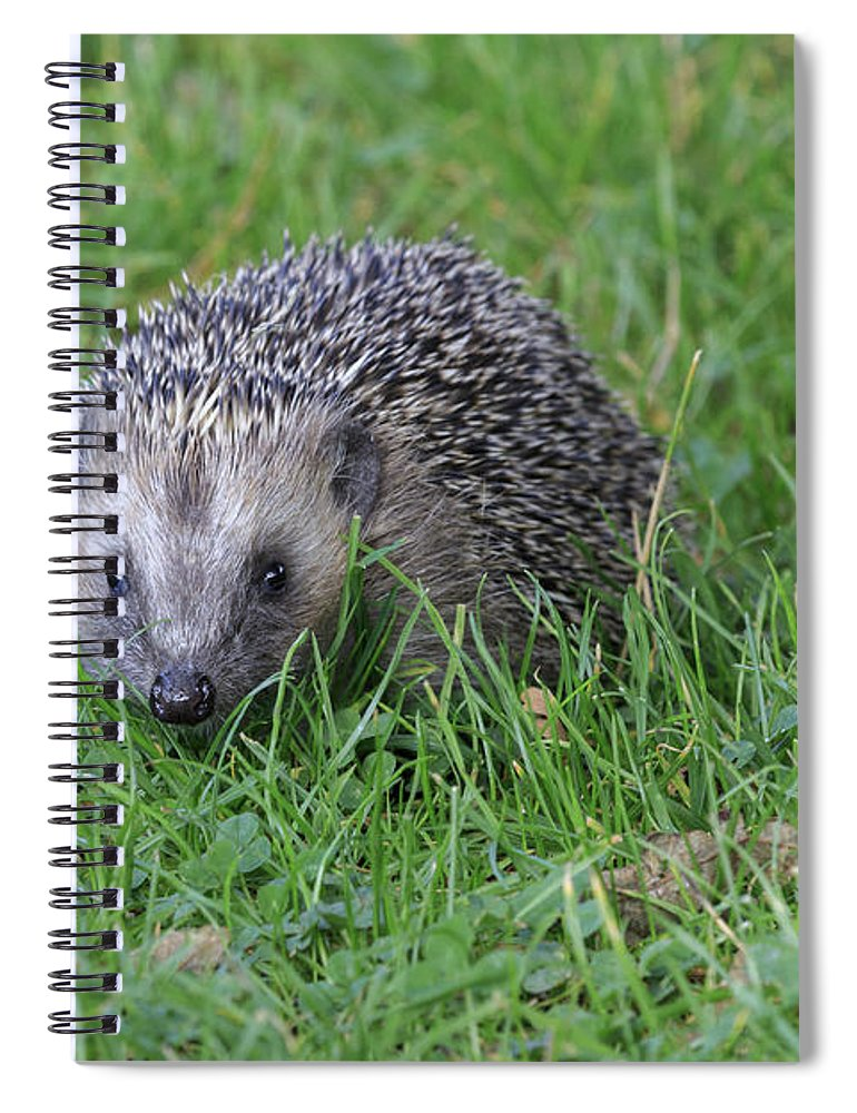 Mammal Spiral Notebook featuring the photograph Hedgehog by Chris Smith