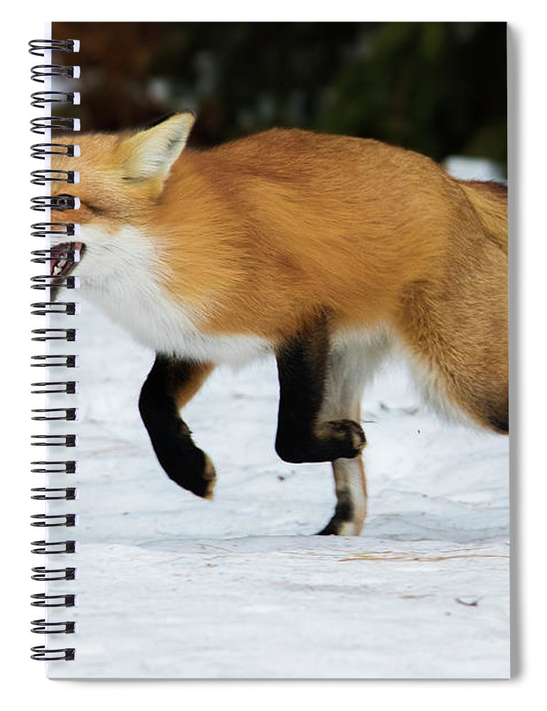 Animal Spiral Notebook featuring the photograph High Speed Fox by Mircea Costina Photography