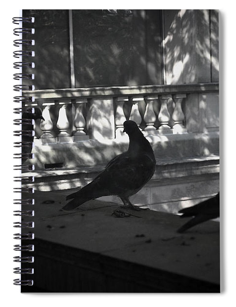 Birds Spiral Notebook featuring the photograph Holding Court by Tim Nyberg