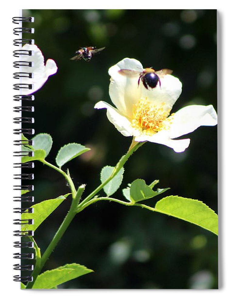 Honey Bees In Flight Over White Rose on Notebook