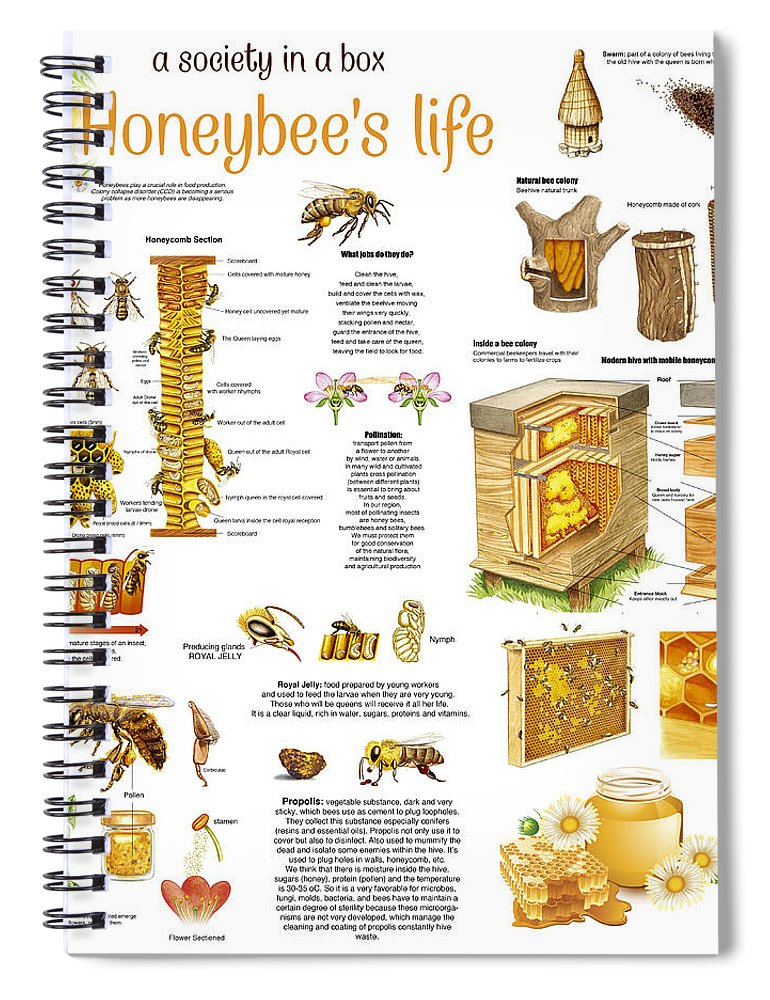 Honey Spiral Notebook featuring the drawing Honey Bees Infographic by Gina Dsgn
