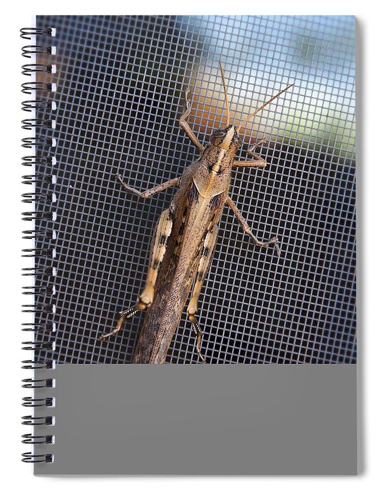 Grasshopper Spiral Notebook featuring the photograph Hopper by Kelley King