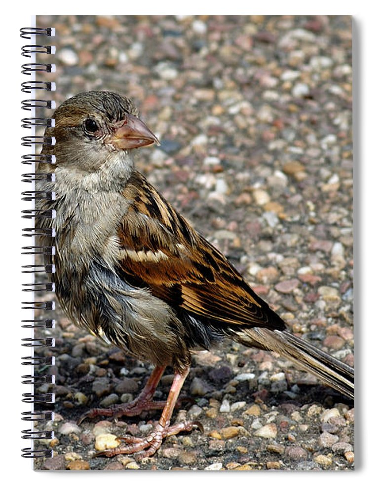 Bakewell Spiral Notebook featuring the photograph House Sparrow Portrait by Rod Johnson