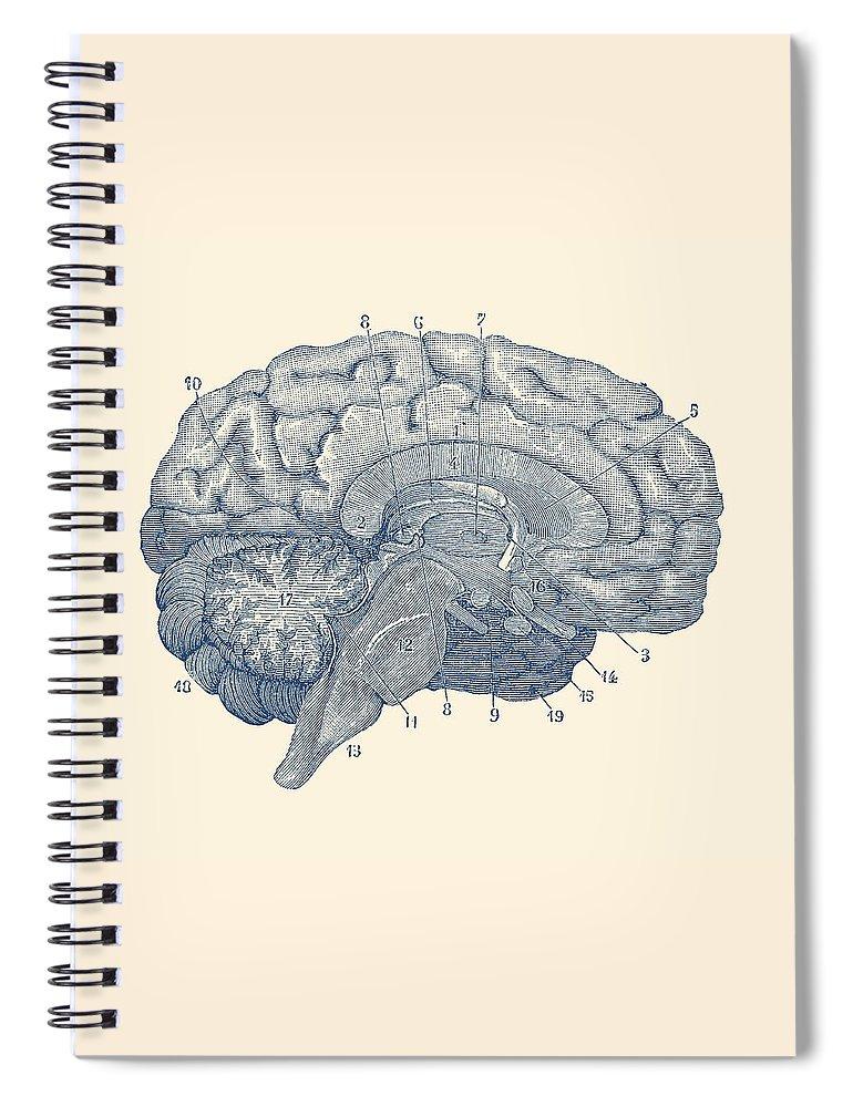 Human Brain Anatomy Diagram Spiral Notebook For Sale By Vintage