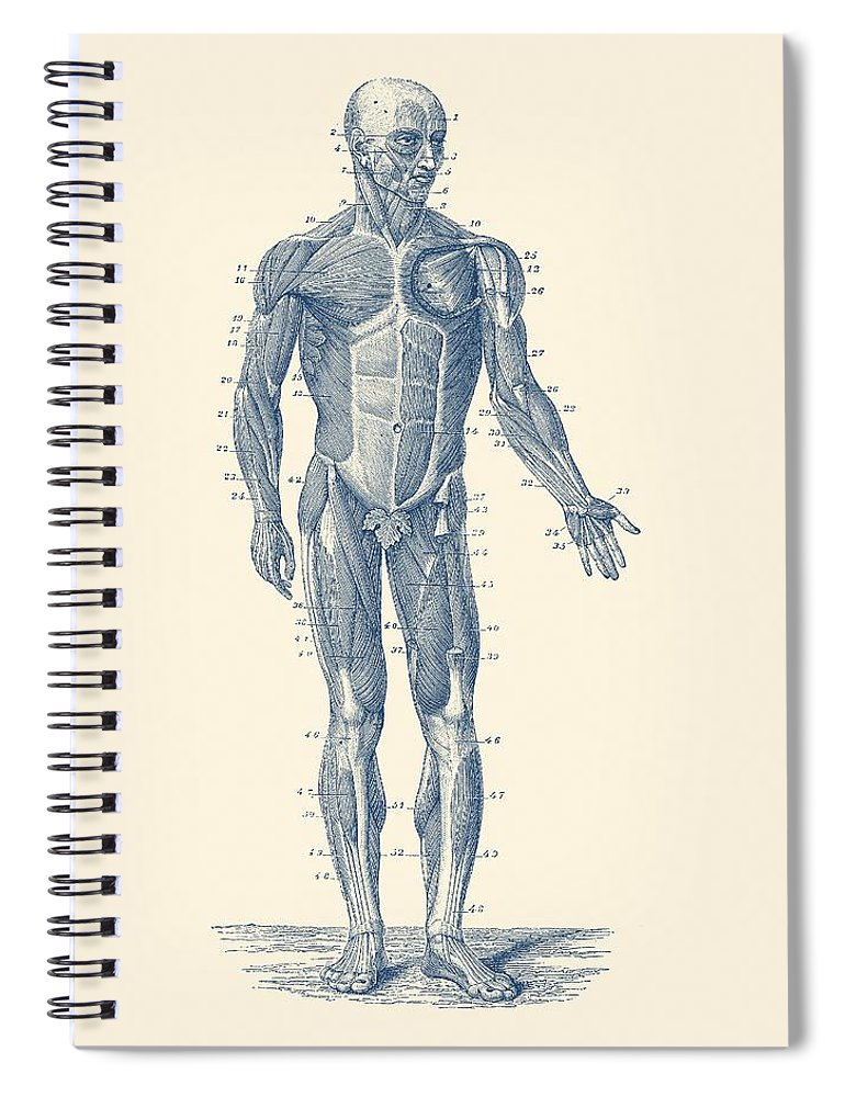 Human Muscle System Vintage Anatomy Print Spiral Notebook For Sale